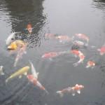 靖国神社の日本庭園