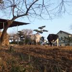 榎本牧場に行ってきた。