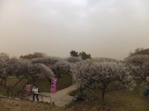 越谷 梅林公園 (2)