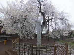 東光寺の石戸蒲桜