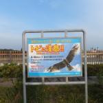 鎌倉~江の島 その4
