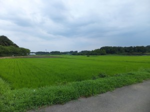見沼田んぼ