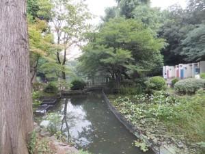 井の頭公園の神田川