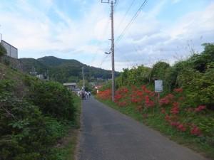巾着田 (1)