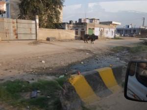 ジャイプールへの道 (2)